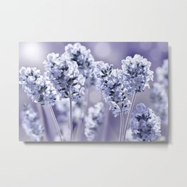 lavender blue 02 Metal Print
