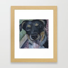 Cattle Dog Pup Framed Art Print