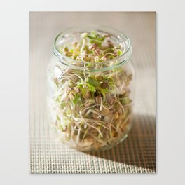 Many cereal sprouts growing Canvas Print