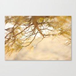 Pine Tree Love Canvas Print