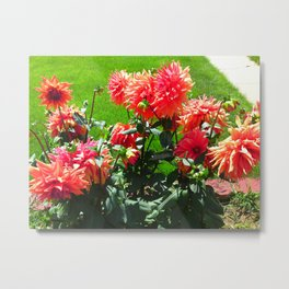 Red Orange Dhalia Metal Print