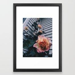 Raindrops on Roses Framed Art Print