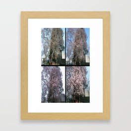 Tree Blossoms Framed Art Print