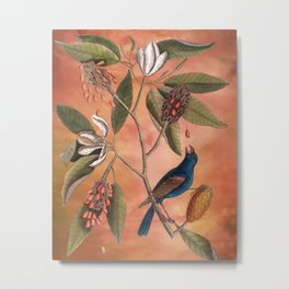 Blue Grosbeak with Sweetbay Magnolia, Vintage Natural History and Botanical Metal Print