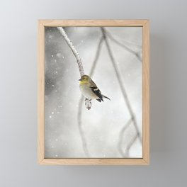 Goldfinch Clinging to an Icy Branch Framed Mini Art Print