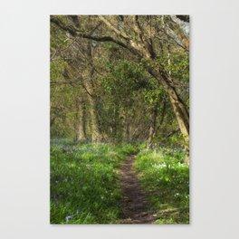 Kears Woodland Walk Canvas Print