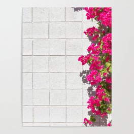 Bougainvilleas and White Brick Wall in Palm Springs, California Poster