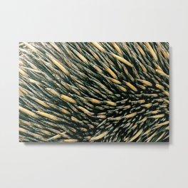 Echidna spines closeup Metal Print