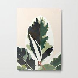 Ficus Metal Print