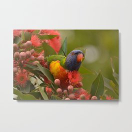Lorikeet Love Metal Print