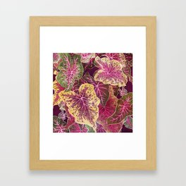 Caladium Framed Art Print