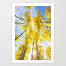Yellow Aspen Canopy Colorado Art Print Art Print