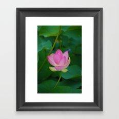 Lotus Blossom Flower 28 Framed Art Print