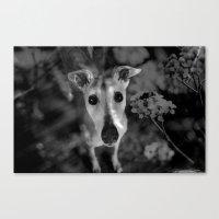 greyhound Canvas Prints featuring greyhound by Lucie B