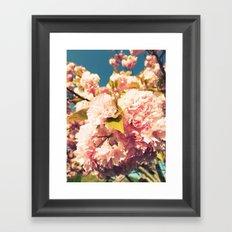 Old School Cherry Blossoms  Framed Art Print