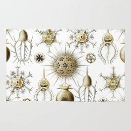 Ernst Haeckel - Phaeodaria Rug