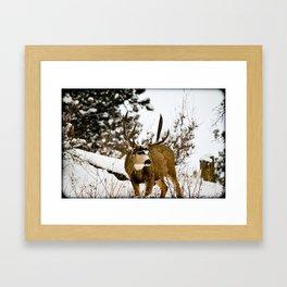 Upper Little Bear Buck Framed Art Print