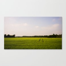 Corn 2 Canvas Print