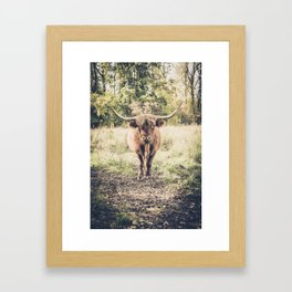 Highland scottish cow cattle long horn Framed Art Print