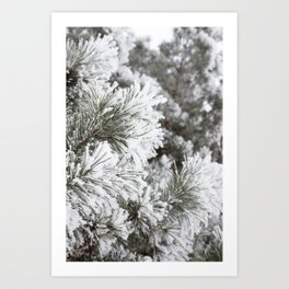 Dressed in Frost Art Print