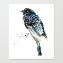 Black Cuckoo Canvas Print