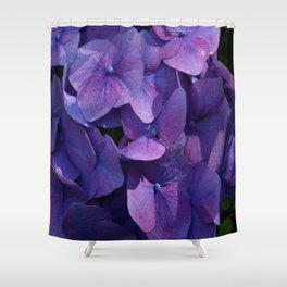 Violet Hydrangea Shower Curtain