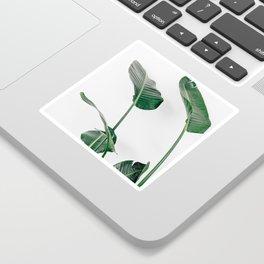 Bird of Paradise Sticker