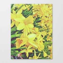 Yellowness Canvas Print