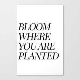Bloom where you are planted Canvas Print