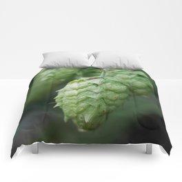 Humulus lupulus, the Common Hop Comforters
