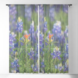 Stand Out - Indian Paintbrush Surrounded by Texas Bluebonnets Sheer Curtain