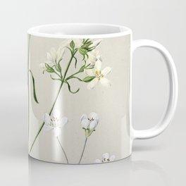 Antique plant New Zealand Gentiana spp drawn by Sarah Featon (1848-1927) Coffee Mug
