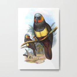 Masséna Kaka Parrot, tropical bird in the nature of New Zealand Metal Print