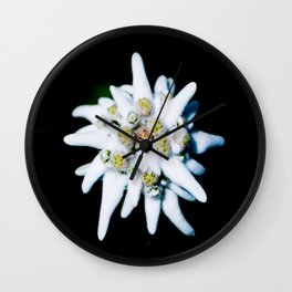 Single isolated Edelweiss flower bloom Wall Clock
