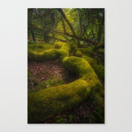 Magical forest - Ireland (RR237) Canvas Print