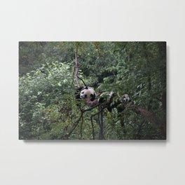 PANDA TREES Metal Print