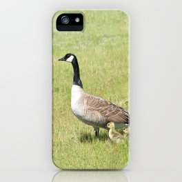 Canada Geese, Mother and Babies iPhone Case