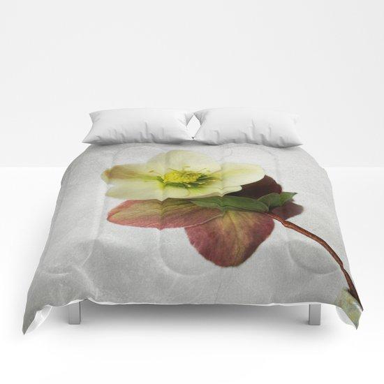 Vintage Helleborus  - JUSTART © Comforters