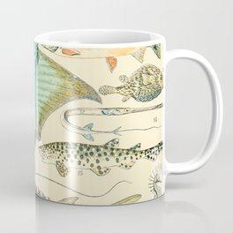 Vintage Fish Diagram // Poissons II by Adolphe Millot XL 19th Century Science Textbook Artwork Coffee Mug