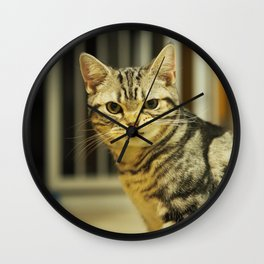 an arrogant silver tabby Wall Clock