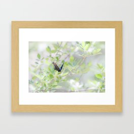 """Swallowtail Splendor"" by Murray Bolesta Framed Art Print"