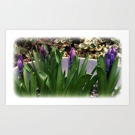 Purple Hyacinths Art Print
