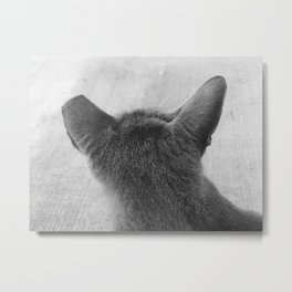 Grey Stray Cat Metal Print