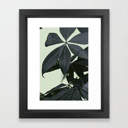 Pachira Aquatica #3 #foliage #decor #art #society6 Framed Art Print