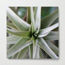 Plant Focus Metal Print