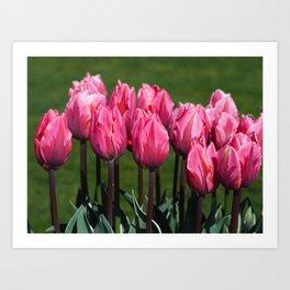Pink tulips - Pretty Princess Art Print