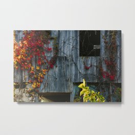 Barn Vines Metal Print