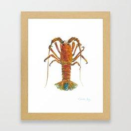 Spiny lobster Framed Art Print