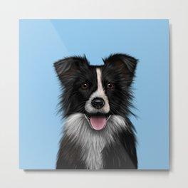 Border Collie Sheepdog on Blue Metal Print