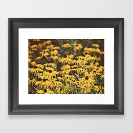 Black-Eyed Susans Framed Art Print